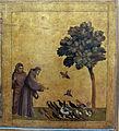 Giotto di bondone, stimmate di s. francesco con stemma cinquini, 1297-99, da s. francesco a pisa, 04.JPG