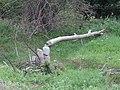 Gmina Bukowsko, Poland - panoramio (147).jpg