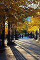 Golden path along sidewalk in Toronto.jpg