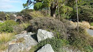 Leonard Cockayne - The grave site of Dr Leonard Cockayne and his wife Maud at Otari-Wilton Bush in Wellington, New Zealand.