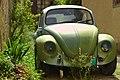 Green Bug (229775993).jpeg