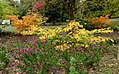 Green Spring Gardens in November (22170321813).jpg