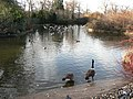 Greenwich Park, duck pond - geograph.org.uk - 651496.jpg