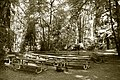 Group of picnic tables in the day use area at Cascadia State Park.jpg