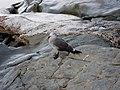 Gull (11319754113).jpg