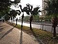 HK 沙田北 Shatin North 石門 Shek Mun 大涌橋路 Tai Chung Kiu Road February 2019 SSG 06.jpg