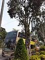 HK CWB 銅鑼灣 Causeway Bay 高士威道 Causeway Road sidewalk trees October 2019 SS2 02.jpg