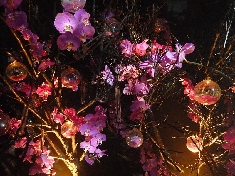 File:Haifa International Flower Exhibition P1130987.JPG