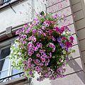 Hanging basket, Strasbourg, 2014 (03).JPG