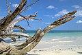 Havelock Island, Tropical bliss, Andaman Islands.jpg