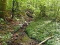 Havreballe Skov (bæk).jpg