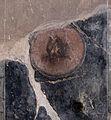Herculaneum — Samnite House (14916178481).jpg