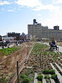Highline NYC 4546171828 efb1ecc4c3.jpg