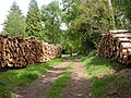 Hinton Park, timber stacks - geograph.org.uk - 1295572.jpg