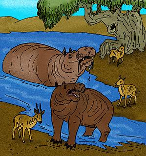 <i>Hippopotamus creutzburgi</i> species of mammal (fossil)