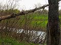 Hlyboke lake Muromets4.JPG