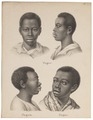 Homo sapiens - Negroïde ras - 1700-1880 - Print - Iconographia Zoologica - Special Collections University of Amsterdam - UBA01 IZ19400039.tif