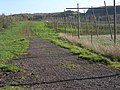 Hops and Apples - geograph.org.uk - 280523.jpg