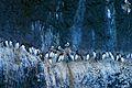 Hornstrandir birds.jpg