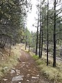 Horton Creek Trail, Payson, Arizona - panoramio (27).jpg