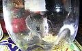 Humane mouse trap 02.jpg