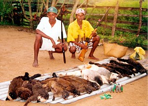 Bushmeat - Endangered species, including lemurs from Madagascar are killed for bushmeat despite this being illegal.