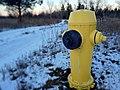 Hydrant 7 365 (16040868117).jpg