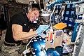 ISS-64 Hopkins works on hydroponics components.jpg