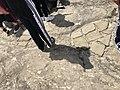 I pavimenti saraceni del castello di Pietrapertosa.jpg