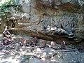 Idle's in deep forest of sreekalahasthi.jpg