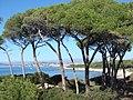 Ile Sainte Marguerite - panoramio - Alistair Cunningham (1).jpg