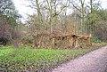 In Bourne Wood - geograph.org.uk - 97192.jpg