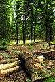 Inside Greathouse Wood - geograph.org.uk - 18542.jpg