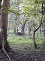 Inside the jungle of Pobitora Wildlife Sanctuary, Assam 04.jpg