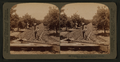Irrigating an orange grove, Riverside, California, from Robert N. Dennis collection of stereoscopic views 2.png