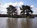 Island on Hawley Lake - geograph.org.uk - 729704.jpg