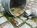 Isny Steuerzahler-Brunnen detail2.jpg