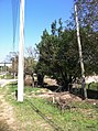 Itupeva - SP - panoramio (1067).jpg