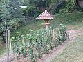 Jókai kertje 2012 (29).JPG