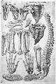 J. Grevin, Anatomie, oft levende beelden vande... Wellcome L0030446.jpg