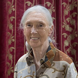 Jane Goodall English primatologist and anthropologist