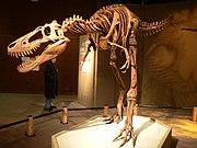 Jane Tyrannosaurus