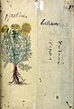 Japanese Herbal, 17th century Wellcome L0030108.jpg