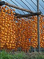 Japanese persimmon fruits drying in Matsuume, Yamato, Saga.jpg