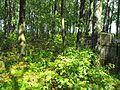 Jewish cemetery Smolevichi 1l.jpg
