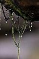 Joseph Rinaldi Rain Drops (6225546181).jpg