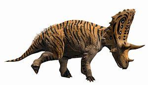Judith River Formation - Judiceratops