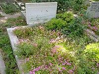 Köknar-Pekuysal mezar.jpg