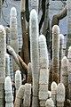 Kalimpong Flora and Fauna3.jpg