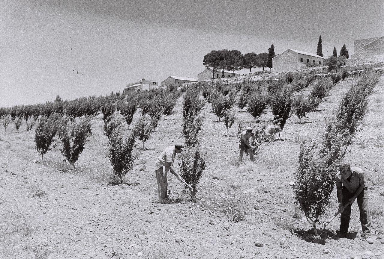 Výsledek obrázku pro foto olšer kibucy